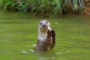 brownfields_otter